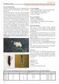 Ausgabe 3zweispaltig.indd - FMart - Seite 7