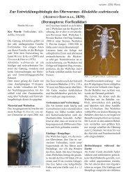 ZAG-Phoenix Jg.1 Heft 2 - FMart