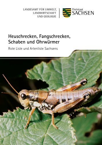 Heuschrecken, Fangschrecken, Schaben und ... - Publikationen