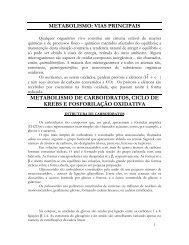 METABOLISMO DE LIPÍDIOS - Portal TopGyn