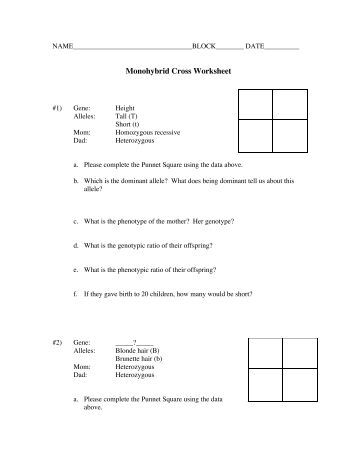 Worksheets Monohybrid Crosses Worksheet Answers collection of monohybrid cross worksheets bloggakuten