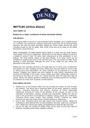 NETTLES (Urtica dioica) - Denes Natural Pet Care