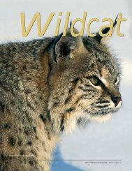 Wildcat Country - New Hampshire Fish and Game Department