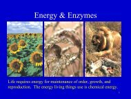 Energy & Enzymes - Nicholls State University
