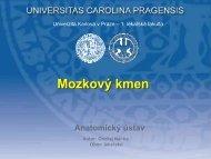 Tr. cortico - nuclearis - Anatomický ústav 1.LF UK - Univerzita Karlova