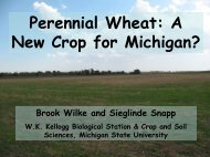 Perennial Wheat: A New Crop for Michigan?