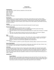 Grizzly Bear Ursus arctos horribilis Classification The ... - Denver Zoo