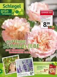 sommeR-Hit - Gartencenter  Schlegel