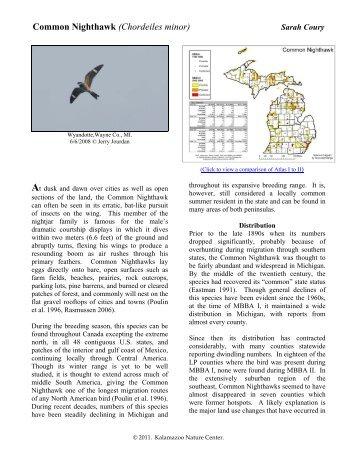 Common Nighthawk - Michigan Breeding Bird Atlas Website