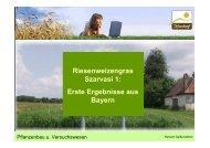 Riesenweizengras Szarvasi 1: Erste Ergebnisse aus Bayern - Biobeth
