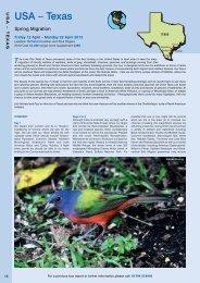 USA – Texas - Ornitholidays