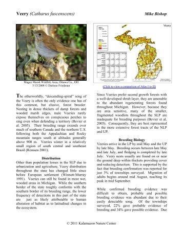 Veery (Catharus fuscenscens) - Michigan Breeding Bird Atlas Website