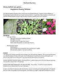 Impatiens Downy mildew, april 2013 - Portland Nursery