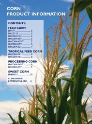 feed corn - Directrouter.com