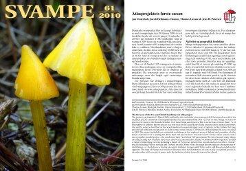svampe - Danmarks svampeatlas