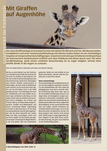 Mit Giraffen auf Augenhöhe - Birseck Magazin