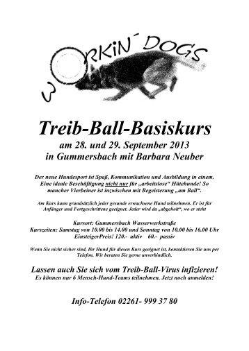 Treib-Ball-Basiskurs - bei Hunde-logisch.de