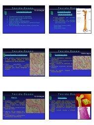 Características T e c i d o  Ó s s e o Classificação ... - CCS