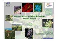 Lutte contre les maladies de la vigne - Union des oenologues de ...