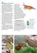 Installation d'un aquarium Tetra AquaArt® pour crevettes - Aquaportail - Page 7