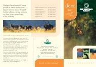 Deer in the National Forest Leaflet