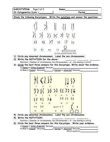 Karyotype Analysis Worksheet Answers - Nidecmege