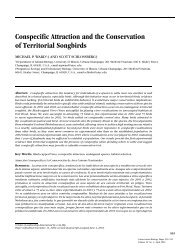 Conspecific Attraction and the Conservation of Territorial Songbirds