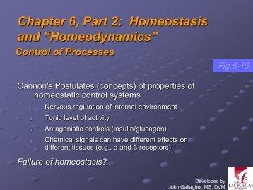 "Chapter 6, Part 2: Homeostasis and ""Homeodynamics"""