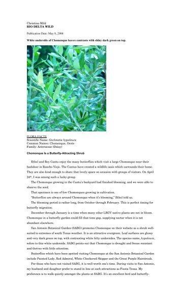 "Gochnatia hypoleuca.pdf - Christina Mild's ""Rio Delta Wild"""