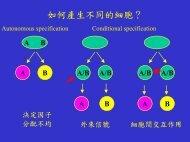 如何產生不同的細胞?