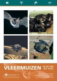 Brochure vleermuizen in en om het huis - De Zoogdiervereniging