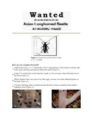 Wanted: Asian Longhorned Beetle