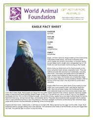 EAGLE FACT SHEET - World Animal Foundation