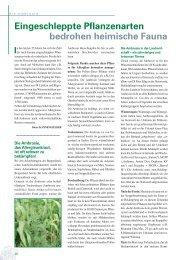 Die Ambrosie, das Allergieunkraut, ist oft schwer zu bekämpfen! (PDF)