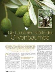 Die heilsamen Kräfte des Olivenbaums - oliven-baum-kraft