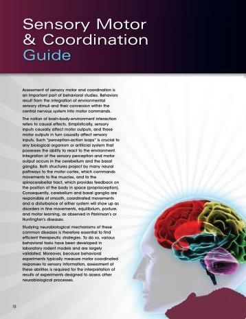 Sensory Motor & Coordination Guide