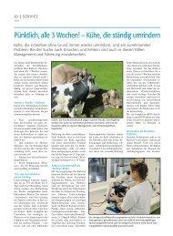 Kühe, die ständig umrindern - Swissgenetics