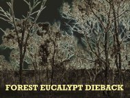 FOREST EUCALYPT DIEBACK - Weeds of Blue Mountains Bushland