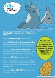 Delfin Fakten: - Motlies