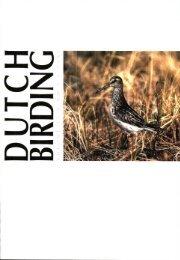 Zie het artikel in Dutch Birding 1995-4