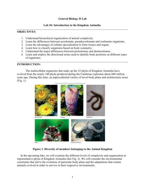 Image of: Phylum Yumpu Lab 7 Introduction To The Kingdom Animalia