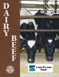 dairy beef program brochure - Beeflinks
