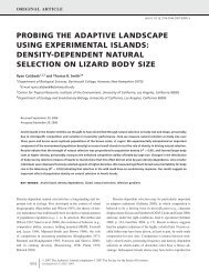 density-dependent natural selection on lizard body size