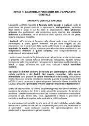 CENNI DI ANATOMIA E FISIOLOGIA DELL'APPARATO GENITALE