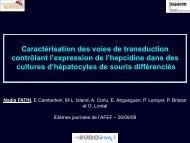 Caractérisation des voies de transduction contrôlant l ... - Afef