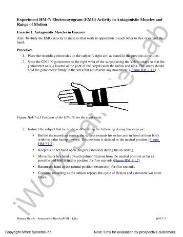 active range of motion exercises pdf