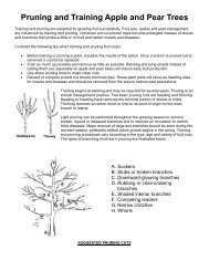 Pruning and Training Apple and Pear Trees