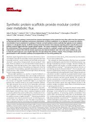 synthetic protein scaffolds provide modular control over metabolic flux