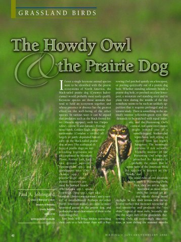 The Howdy Owl & the Prairie Dog - American Birding Association