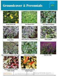 Groundcover & Perennials - Product Info (PDF) - ForemostCo
